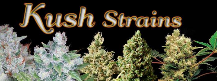 Kush-Strains