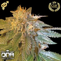 LA Confidential (DNA Genetics)
