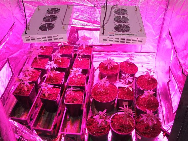 led grow lampe test