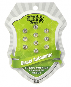 Diesel Automatic, Royal Queen Seeds3