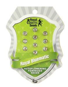 Royal Bluematic, Royal Queen h