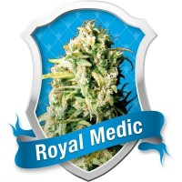 Royal Medic, Royal Queen