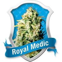 Royal Medic, Royal Queen