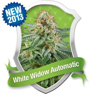 White Widow Automatic, Royal Queen Seeds, rqs