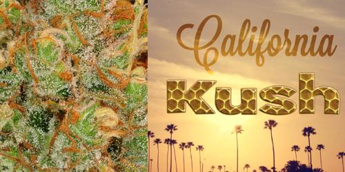 California-Kush