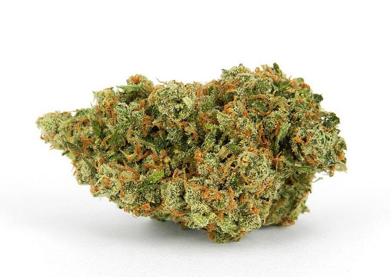 JAck Herer, medical Marijuana