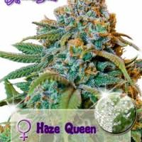 Haze Queen