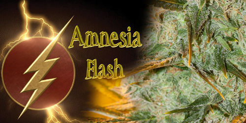 Amnesia-Flash-Anesia-Seeds
