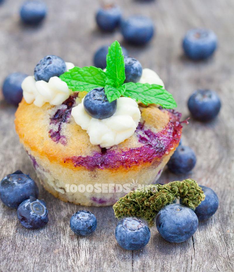 Blauberr-Cannabis-Muffins, backen mit Cannbis, Cannabis-Rezepte