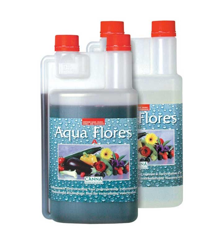 Canna-Aqua-Flores