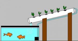 Hydroponik Aeroponik Aquaponik 5 Teil Aquaponik