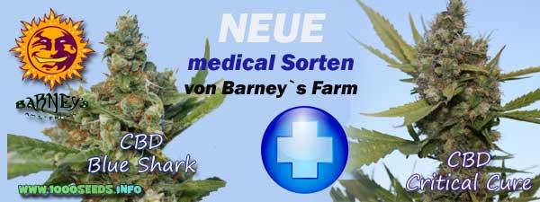 Barney-neue-Sorten