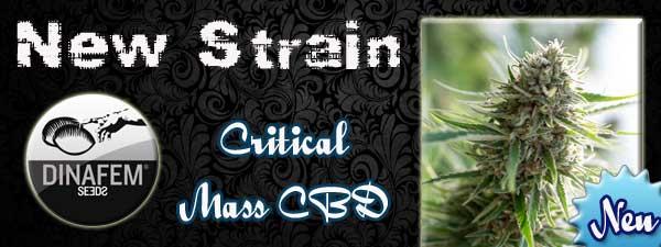 Critical-Mass-CBD
