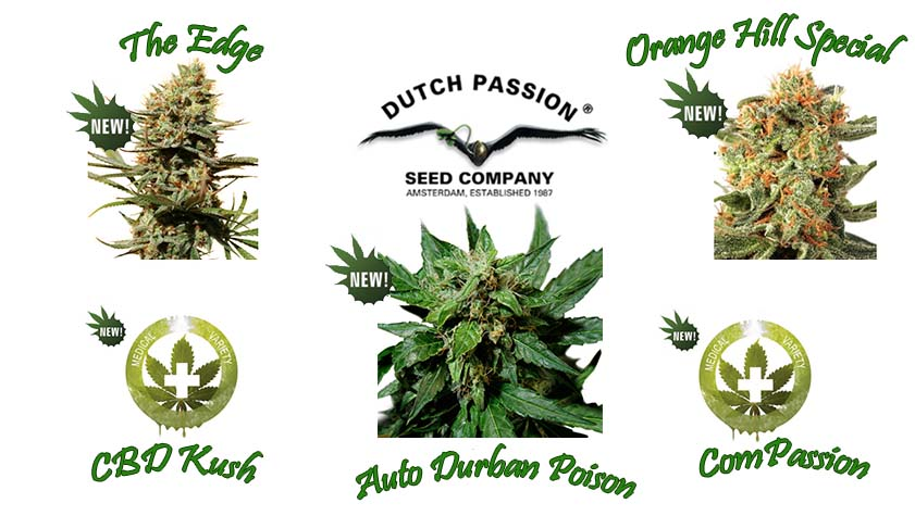 Dutch Passion neue Seeds 2014