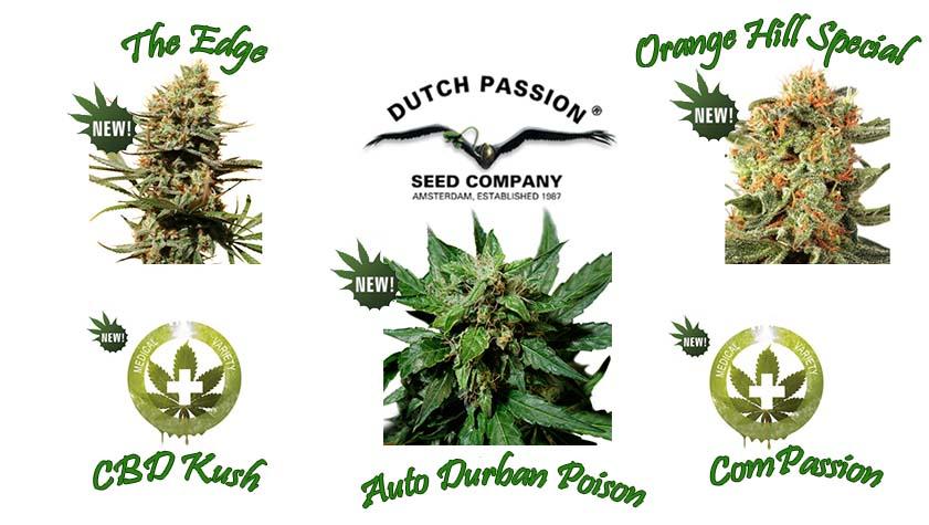 Dutch Passion neue Seeds 2014