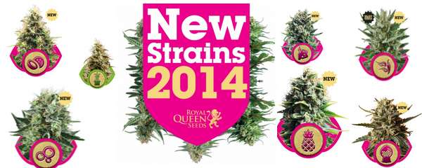 Royal Queen Seeds - new Strains