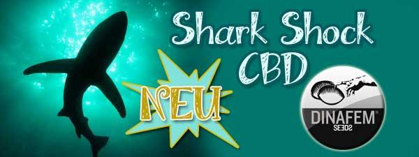 Shark Shock CBD-Dinafem