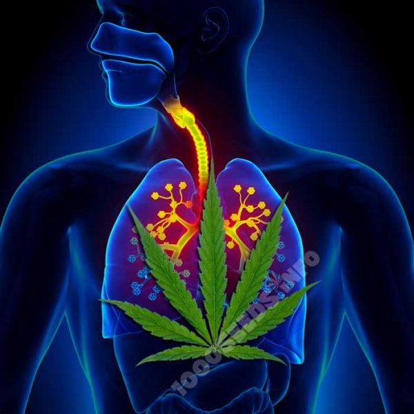 Asthma-Cannabis, Cannabis in der Medizin, Cannabis und Atemwegserkrankungen