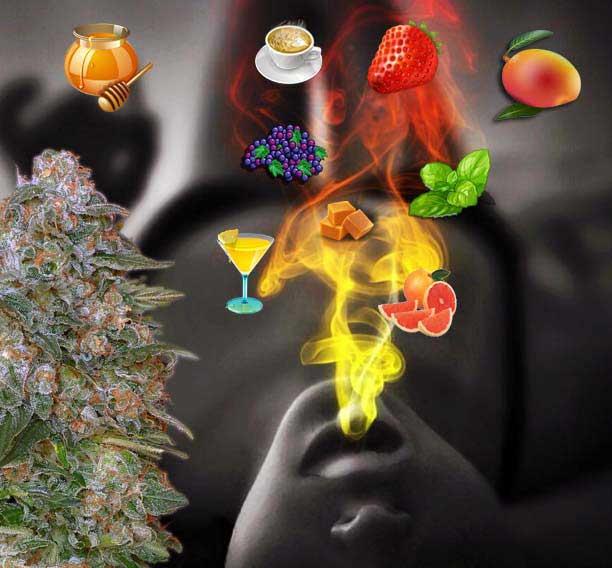 Cannabis-aroma, Terpene Cannabis, Aroma Marijuana