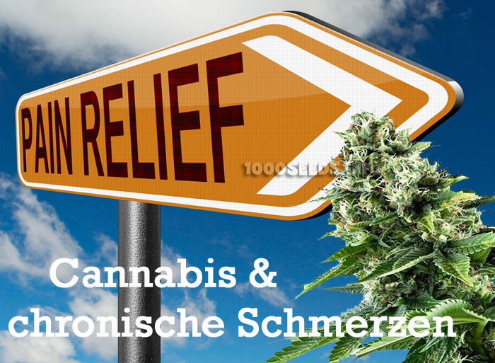 Cannabis gegen Schmerzen, medizinisches Cannabis bei chronischen Schmerzen, Schmerzbehandlung mit Marijuana