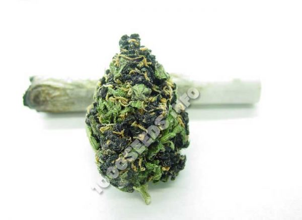 Cannabis-legal, Cannabis-blog, Infos zu Cannabis