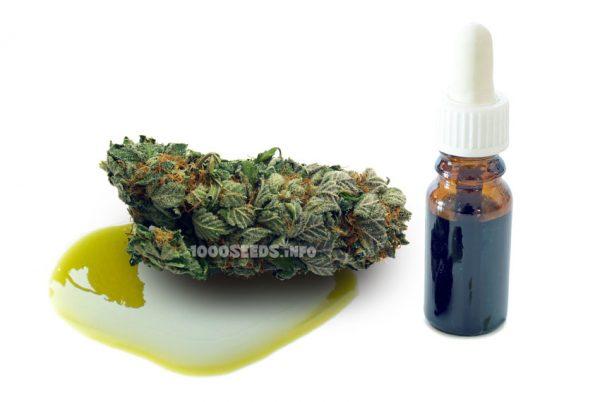 Cannabis-tinkturen, Tinktur aus Cannabis selber herstellen