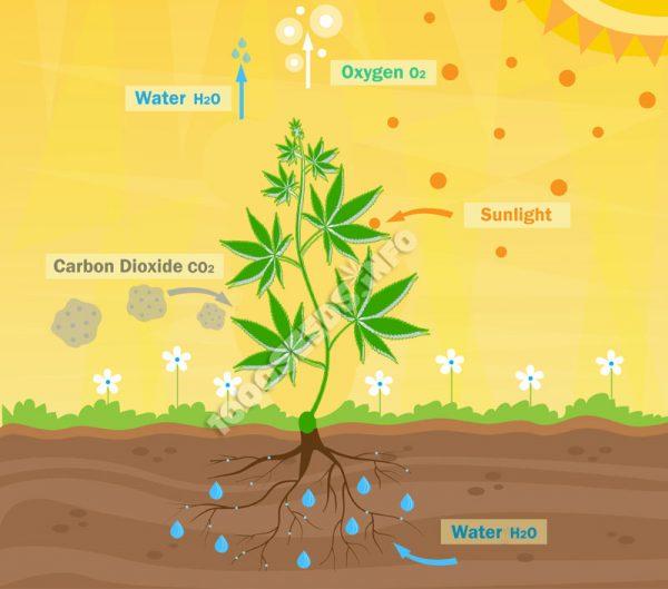 Co2 o2 Cannabisanbau, mit Co2 die Erträge steigern