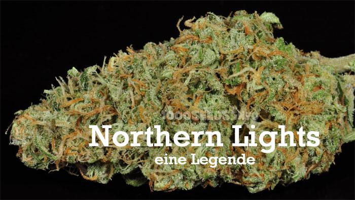 Northern Lights, legendärer Cannabis Strain