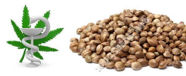 medical Seeds, Cannabis-Samen medizinische Anwendung, Behandlung