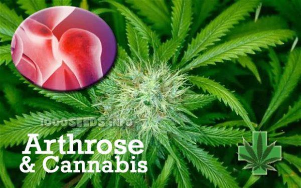 Arthrose-und-Cannabis, Arthritis, Cannabais bei chronischen Schmerzen