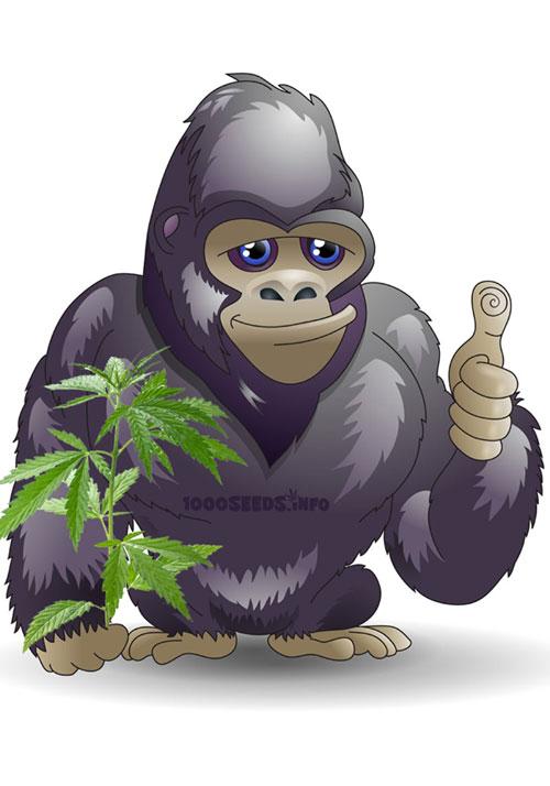 Guerrilla-Anbau, Cannabisanbau im Freien, Guerila-Grow
