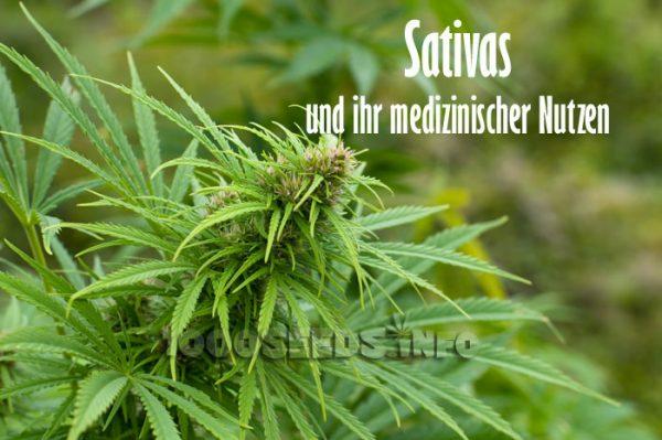 Sativas und ihr medizinischer Nutzen, medizinische Vorteile von Sativas, Effekte