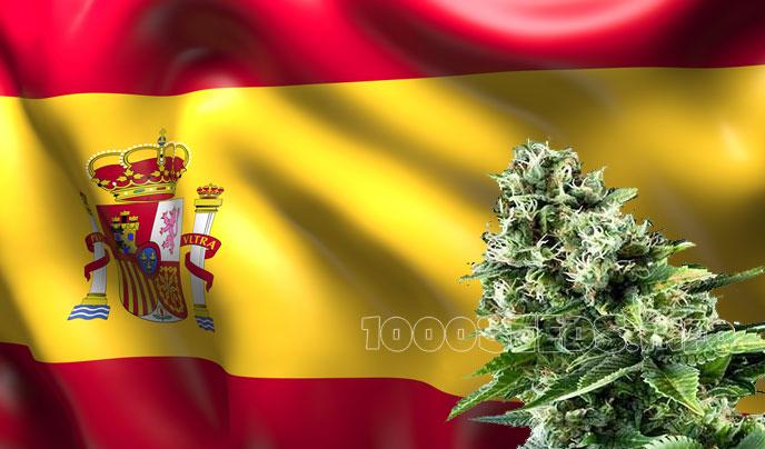 Spanien-Cannabis, Cannabis Social clubs Spanien, Cannabis in Spanien