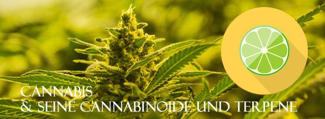 Terpene-von-Cannabis, Aroma von Cannabis