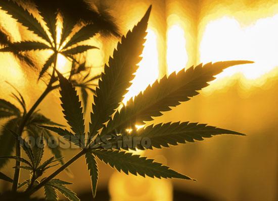 beleuchtung-Marijuana, Beleuchtung Growroom kaufen, Growshop 1000Seeds