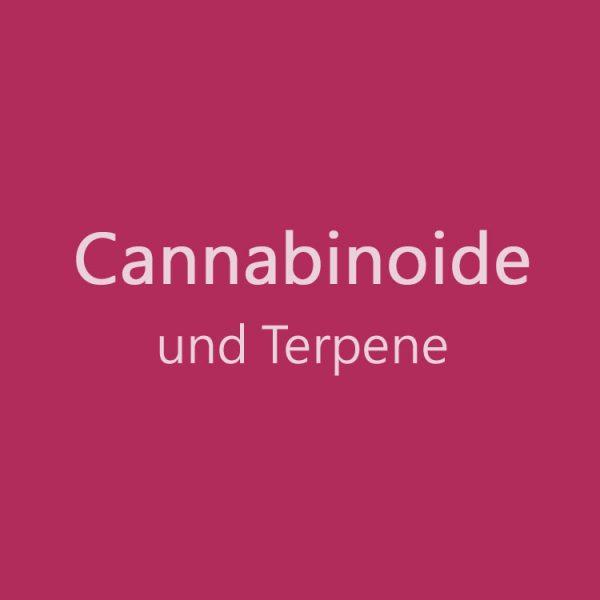 cannabinoide und Terpene, medizinisches Cannabis