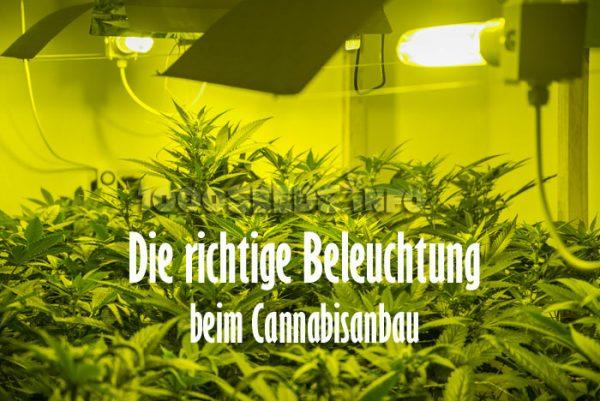 grow-licht, Beleuchtung Cannabis, Growshop, Grow-Tipps