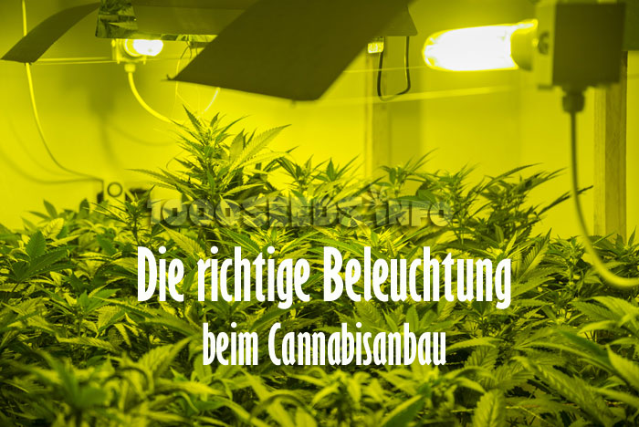 die beleuchtung von cannabispflanzen 1000seeds. Black Bedroom Furniture Sets. Home Design Ideas
