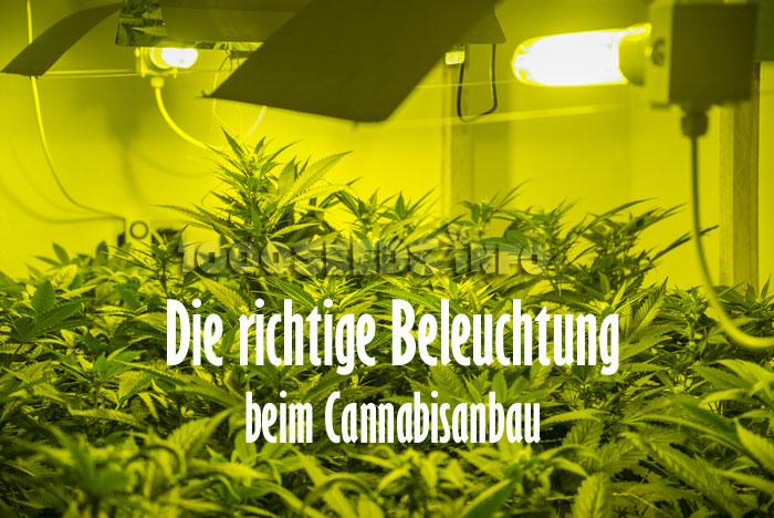 die beleuchtung von cannabispflanzen 1000seeds. Black Bedroom Furniture Sets. Home Design Ideas
