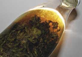 medical Cannabis Tinktur