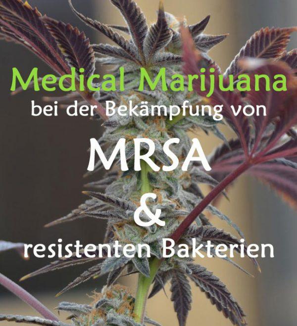 MRSA und Cannabis, Cannabis gegen resistente Ba, medizinisches Cannabiskterien