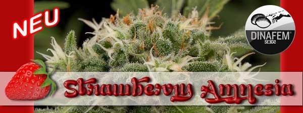 strawberry-amnesia