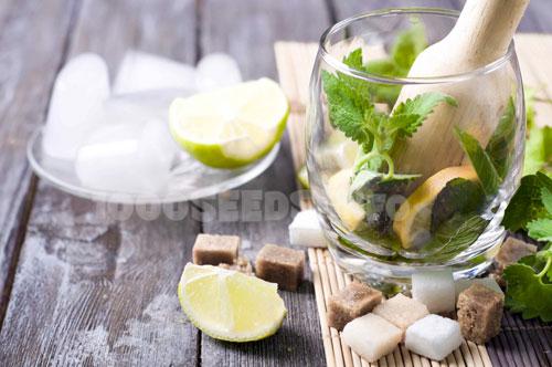 Mojito-Cannabis, Cocktails mit Cannabis, Rezept mit Cannabis