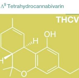 medizinischen Effekte von THCV