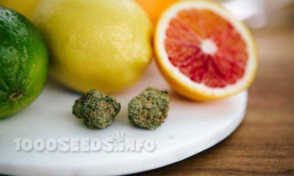 Terpene-und-Marijuana, Die Wirkung von Terpenen