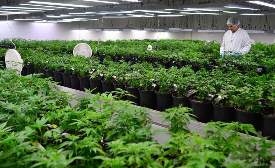 medizinisches Cannabis legalisieren