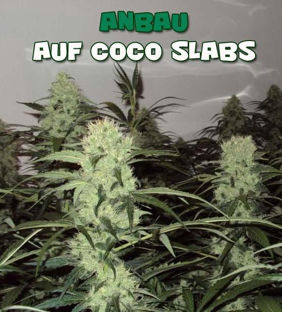 Anbau-auf-coco-slabs, Grow-Anleitung, Grow-tipps