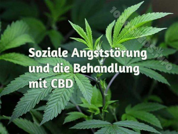 soziale Angst und Cannabis, medical Marijuana, Cannabis mediziinisch