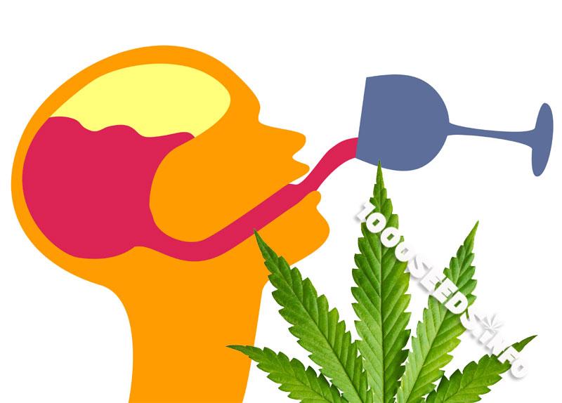 Cannabis-und-alkoholismus, Gehirnschäden und Cannabis