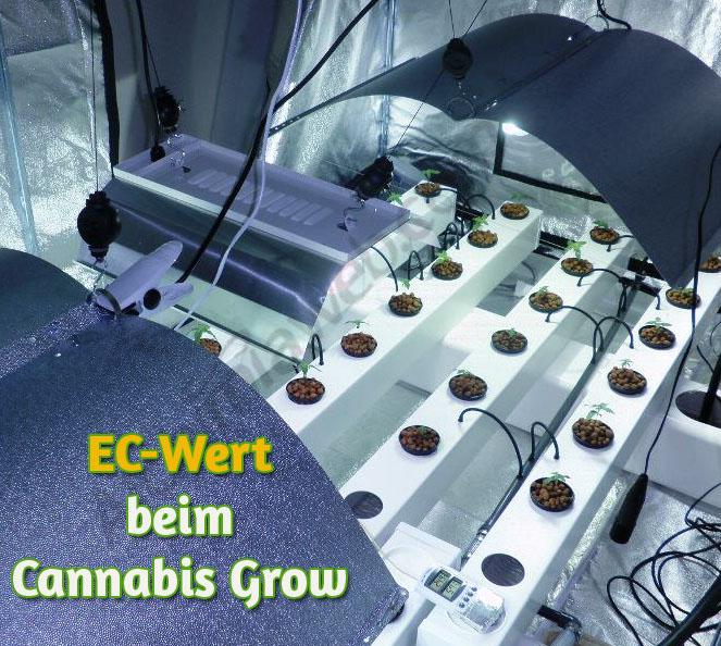 Der Ec Wert Beim Cannabis Grow 1000seeds